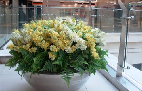 什么花卉最适合在室内养?【及巳】